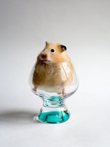 bigstockphoto_hamster_in_the_glass_560949
