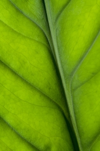bigstockphoto_Leaf_Closeup_1570704